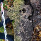 """Осенью 2016 г. найден крест в Волосовском районе, который был зарисован Рерихом в конце XIX в. Он считался утраченным, Мы его откопали на старом кладбище из кучи мусора. На этом же кладбище ещё 10 крестов, среди них и  два """"креста в круге"""", но их украли."""