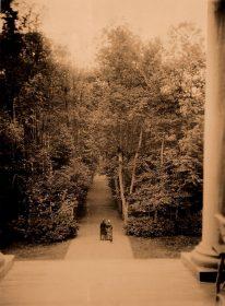 Монрепо. Вид на липовую аллею с крыльца усадебного дома